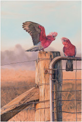 Limited edition print of 'Galah' original painting by Brisbane artist Swapnil Nevgi