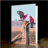 "Greeting card - made from art print of my original art ""galahs"""