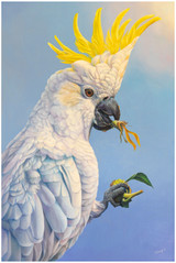 """""""Sunflower Thief"""" - sulpher crested cockatoo portrait open edition prints"""