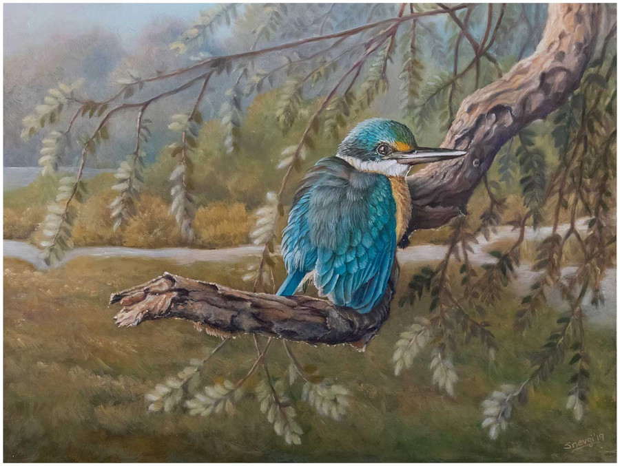 Limited edition prints of 'Sacred Kingfisher' - an original painting of Sacred kingfisher by Swapnil Nevgi