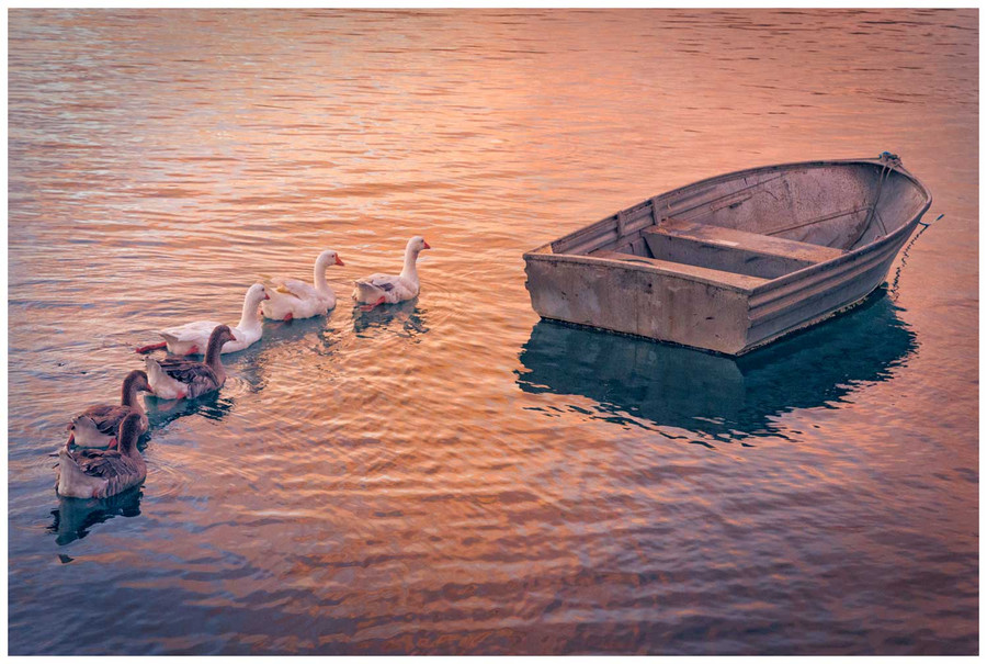 """The Travellers"" - fine art photo print of ducks early morning by Swapnil Nevgi"