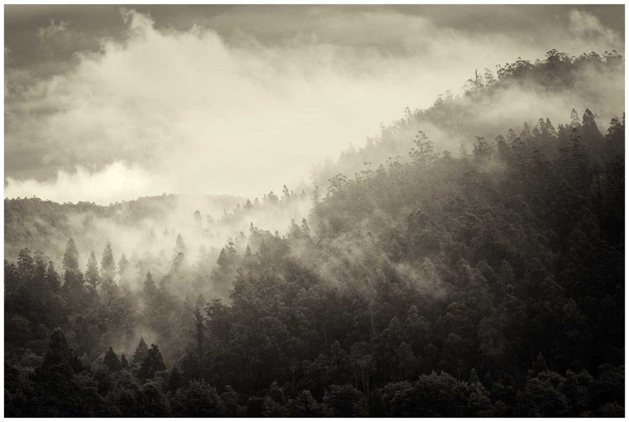 """Enchanted Forest "" - fine art photo print of misty forest morning in Tasmania by Swapnil Nevgi"