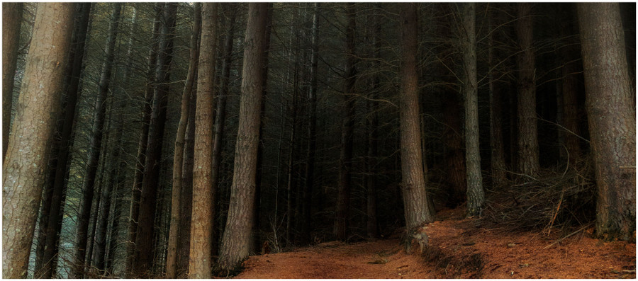 """""""Fairytale forest"""" -  fine art photo print of a path through the forest at Queenstown by Swapnil Nevgi"""