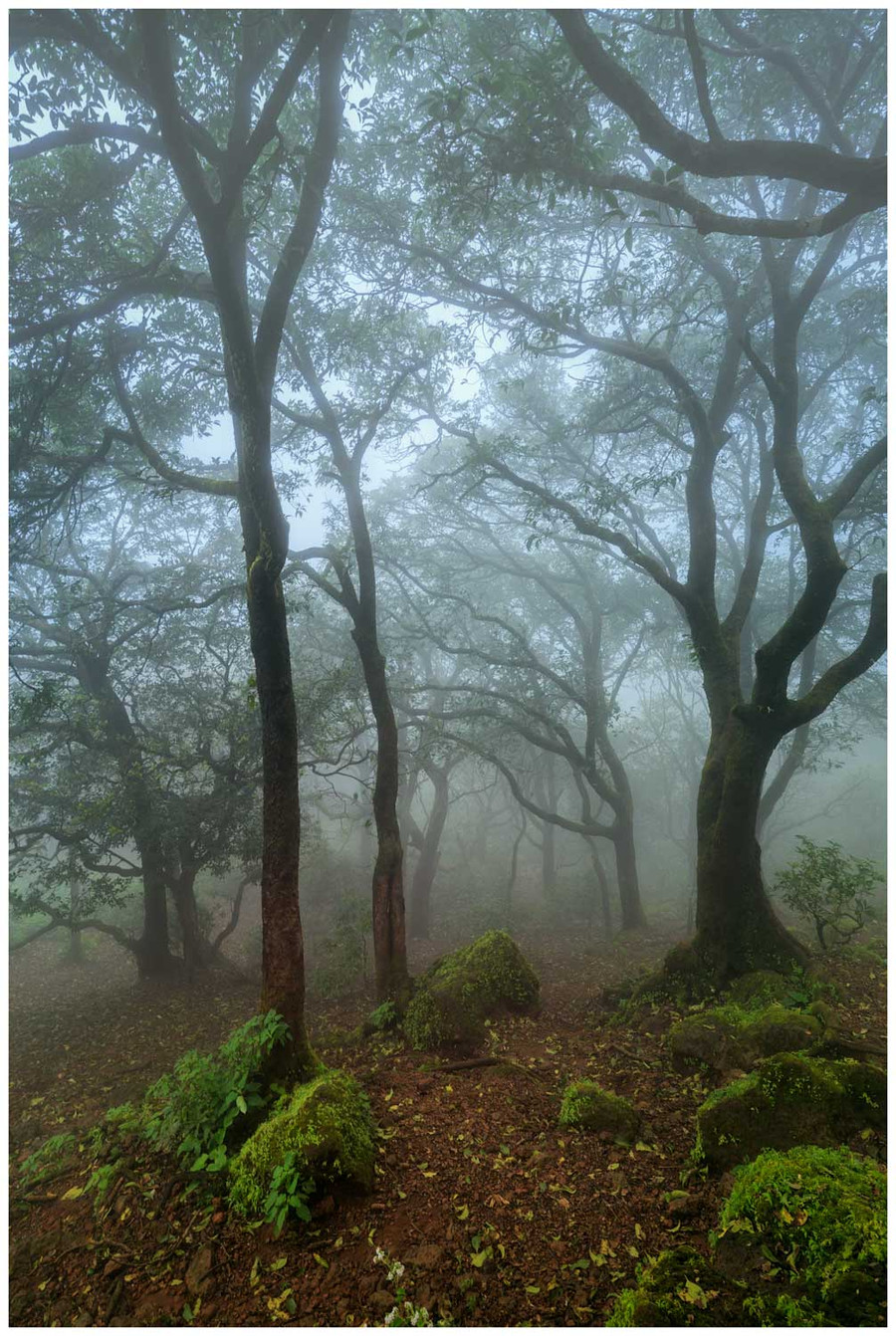 """Forests of India"" -  fine art photo print of forest in India by Swapnil Nevgi"