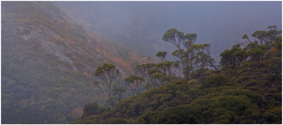 """Misty Mountains of Cradle"" -  fine art photo print of the mist in the mountains by Swapnil Nevgi"