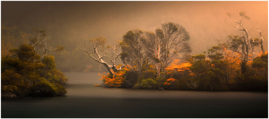 """""""Dancing Trees"""" -  fine art photo prints of trees in the middle of Dove Lake at Cradle Mountain by Swapnil Nevgi"""