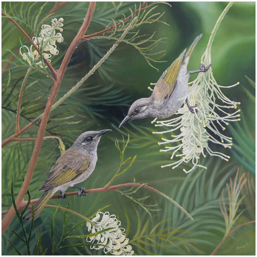 Limited edition prints of 'Love Blossoms' painting showing two brown honeyeaters