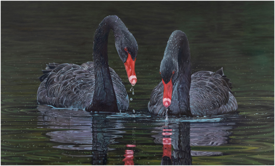 """Limited edition prints of """"Black Magic"""" an original painting of two black swans by Swapnil Nevgi"""