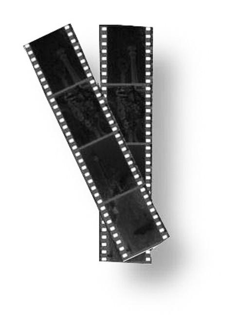 Roll Film Scans (C-41/B&W)