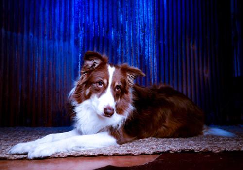 Pup Portraits