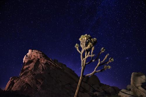Joshua Tree Photo Campout