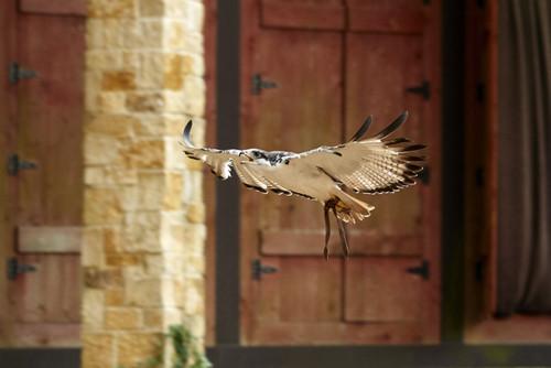 Birds in Flight Shooting Experience
