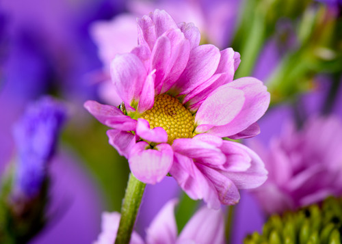 Floral Photography Artistry