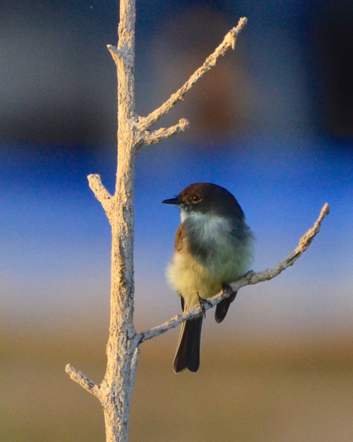 Bird Photography Sunrise Stroll