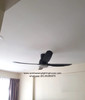 W56WV Black in condo living room