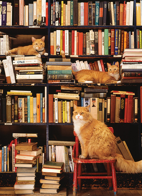 Gotham Bookstore Cats