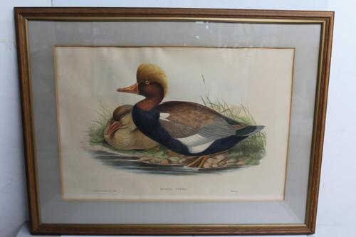 "Brown Picture Frame Ducks On River Bank Branta Rufina Hanging Art Photo 61x75"""