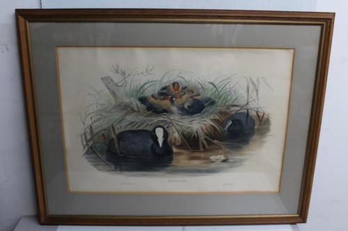 "Brown Picture Frame Black River Bird Nest Fulica Atra Hanging Art Photo 61x75"""