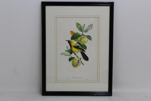 """Wooden Picture Frame Black & Yellow Small Bird Print Hanging Art Photo 47x61"""""""