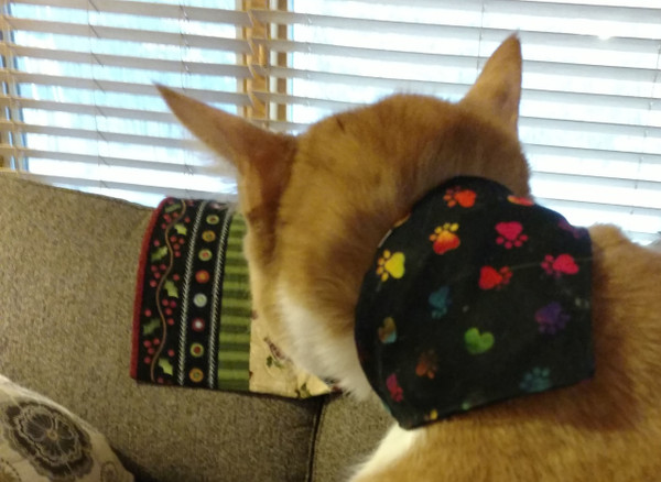 GrubDudz Cat Bandana threads over your cat's collar - making it easy to secure and safer for your cat than a tied neckerchief.