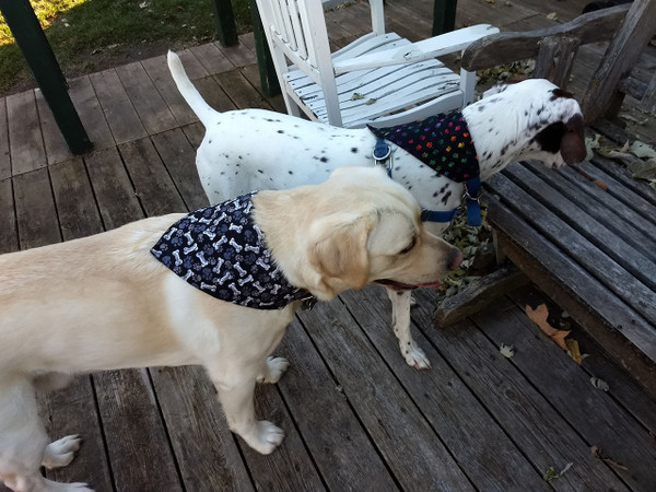 GrubDudz Reversible Dog Bandanas