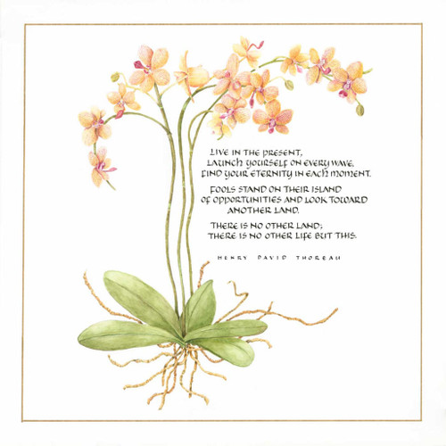 Orchid and Thoreau