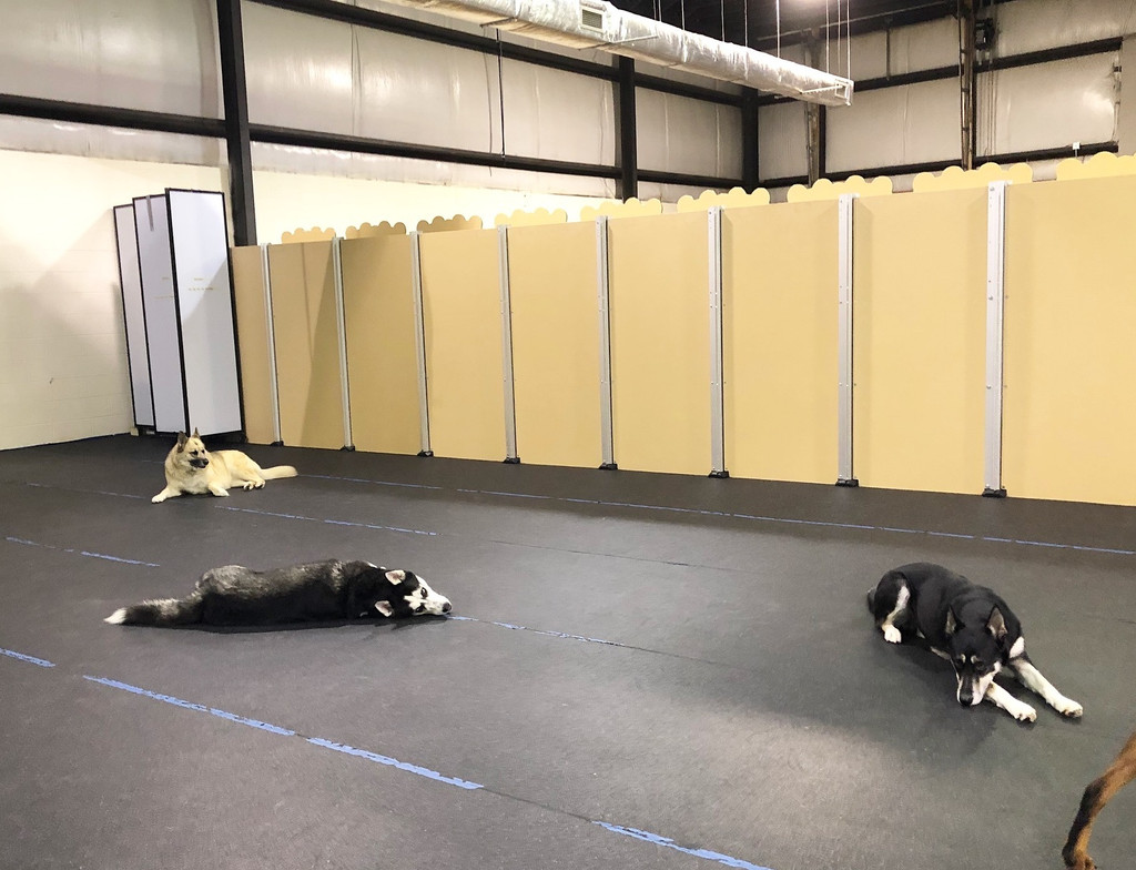 Happy guests taking a snooze in the LexPets' play area.
