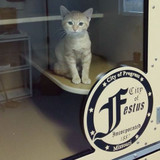 The City of Festus Cat-Hotel units.