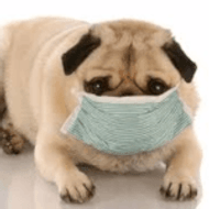 Common Kennel Diseases