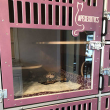 Cat-Hotel used as cat breeding cage by ApexExotics.