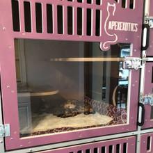 cat breeding cage.