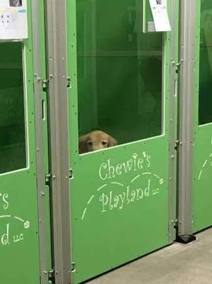 Dog Behavior 101: Noise