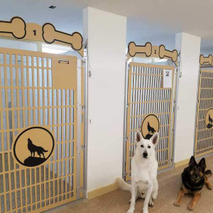 Starting Your Own Dog Daycare or Boarding - Cleaning Your Kennels
