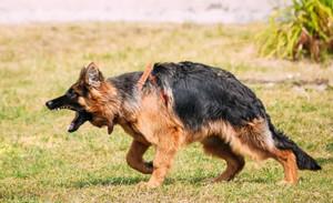 Dog Behavior 101: Aggression