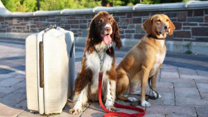 Preparing Your Dog For Boarding