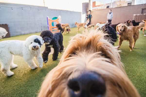 The Benefits of Dog Daycare Services