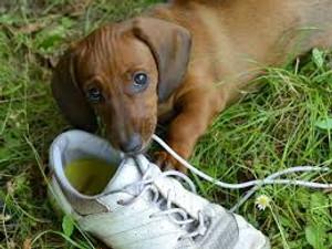 Dog Behavior 101: Chewing