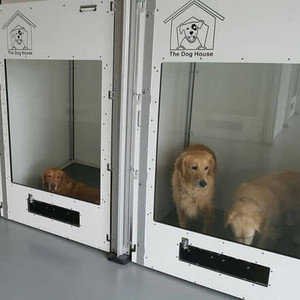 Starting Your Own Dog Daycare or Boarding - Kennel Safety