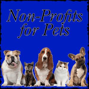 Non-Profits for Pets