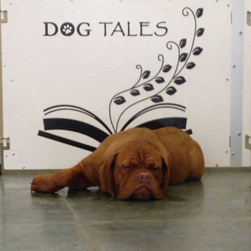 Dog Tales Day Camp & Boarding sleepy pup.