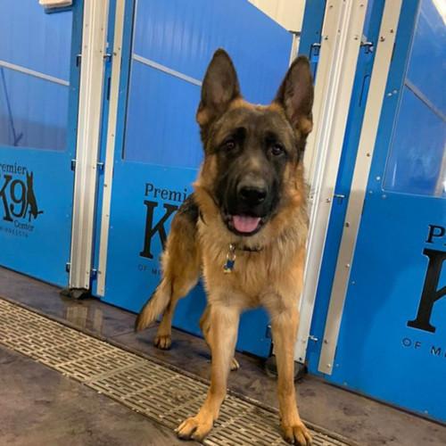 Premier K9 Center of Minnesota's custom kennel gate.