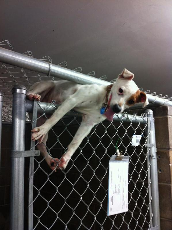 Dog Behavior 101: Escaping