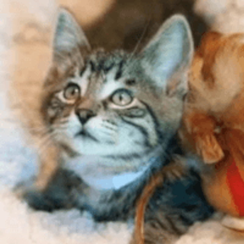 Adopt a Cat Month!
