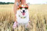 5 Tips for Keeping Your Pet Cool In The Summer Heat