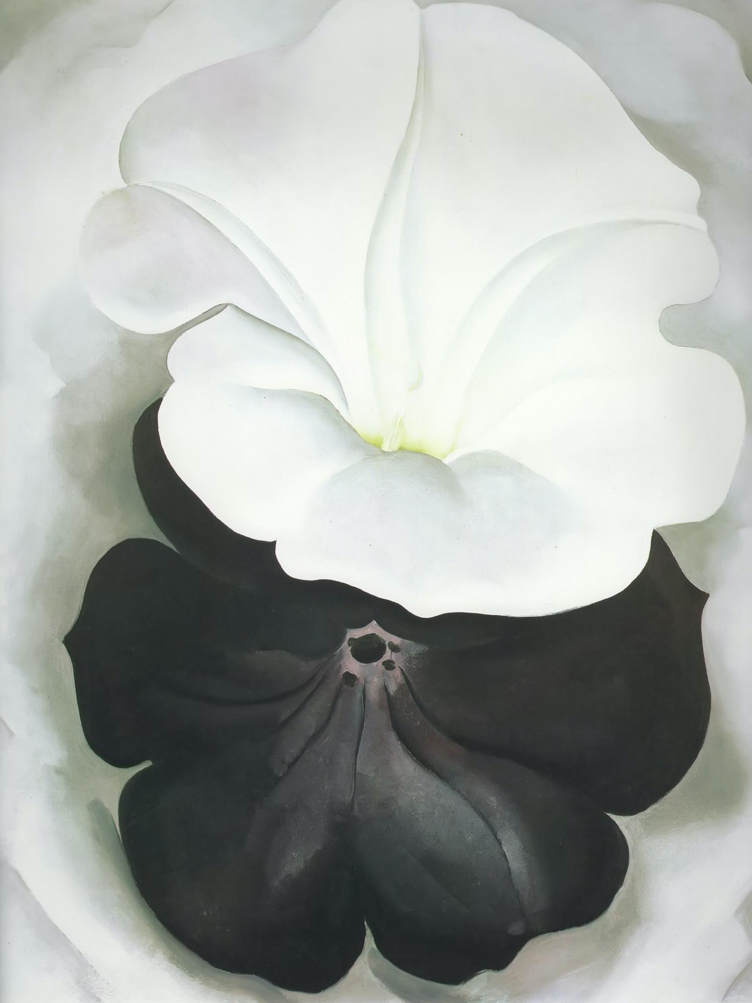Black Petunia And White Morning Glory Ii By Georgia O Keeffe Print
