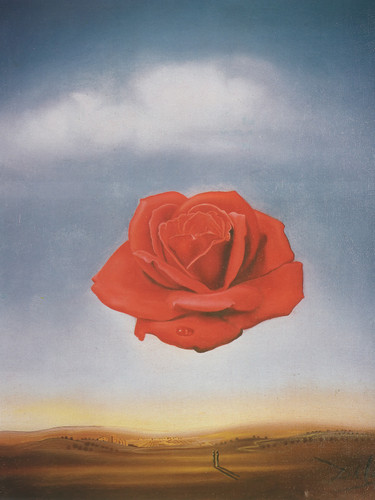 Meditative Rose 1959 by Salvador Dali Print