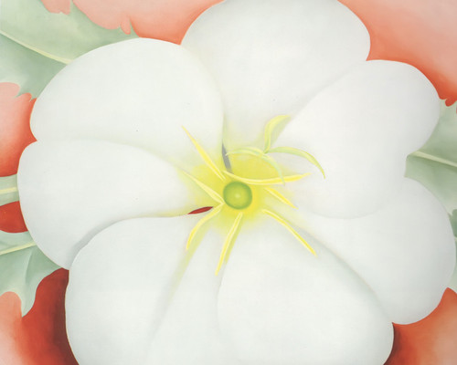 White Flower On Red Earth No 1 by Georgia O Keeffe Print