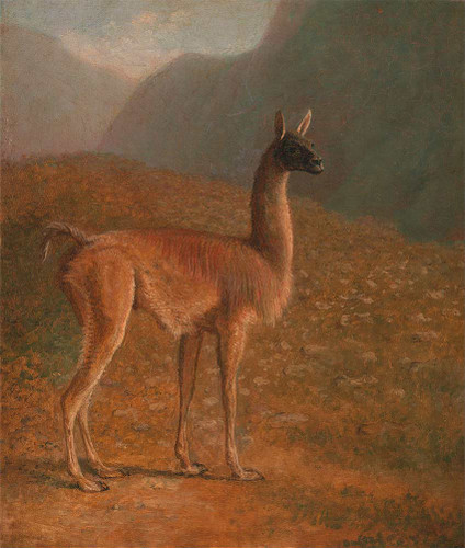 Guanaco By Jacques Laurent Agasse Art Reproduction from Wanford