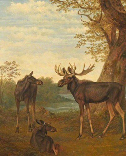Moose By Jacques Laurent Agasse Art Reproduction from Wanford