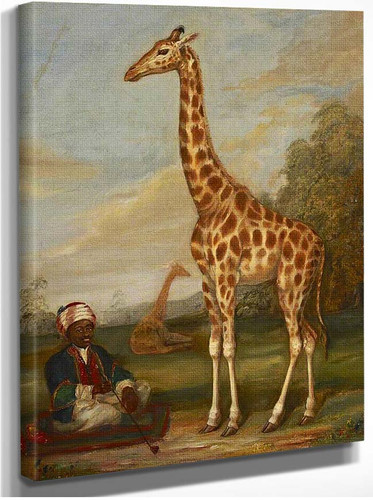 Two Giraffes With A Seated Indian Attendant In A Savannah Landscape By Jacques Laurent Agasse
